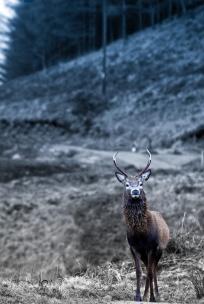 deer-001