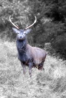 deer-001_001