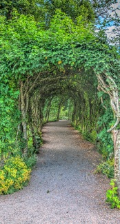 Green 'tunnel' to Ballindalloch Castle