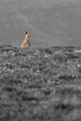 rabbit_002