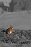 rabbit_003